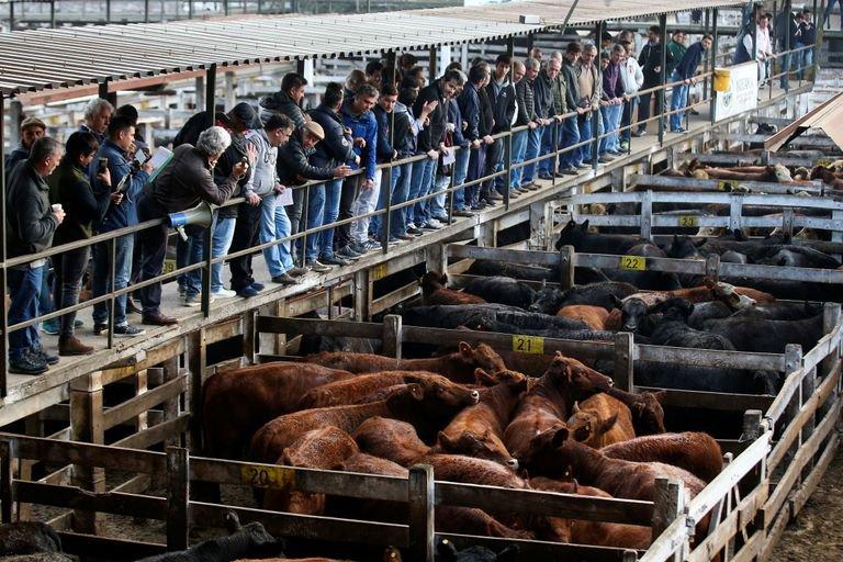 Carne vacuna: ¿Cómo está el sector tras el cese de comercialización y ante la incertidumbre sobre qué hará el Gobierno?