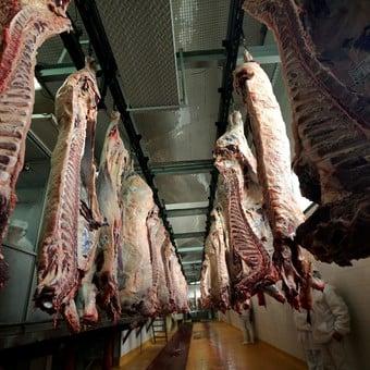 Matarifes y el celo a las exportaciones de carne